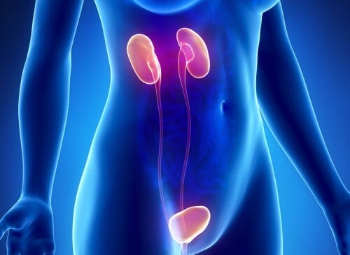 Tio symptom för njursvikt