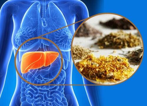 Medicinala örter som rensar din lever
