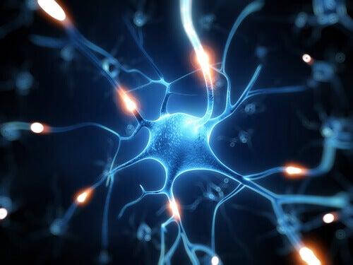 Resveratrol, ett utmärkt skydd för hjärnan