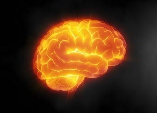 Skydda-Hjärnan