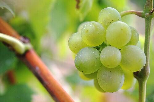 Gröna vindruvor