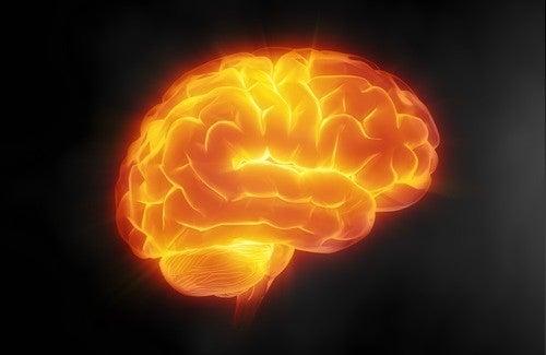 7 tips för att ta hand om din hjärna