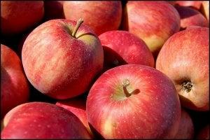 äpple-tom-gill