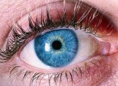 Upptäck alzheimers genom ögonen