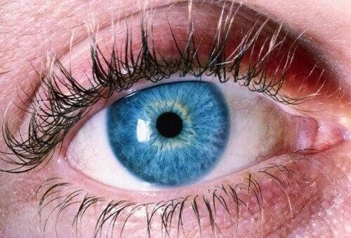 Metod för att upptäcka Alzheimers genom ögonen