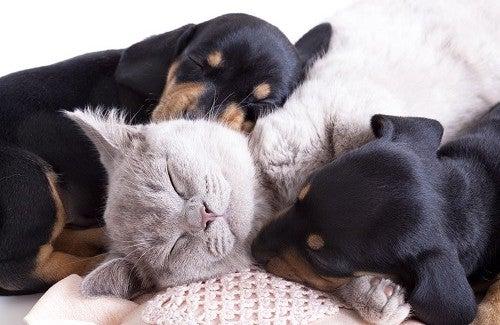 Varför husdjur är så bra för vår hälsa