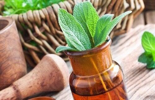 15 av de bästa och mest omtyckta medicinalväxterna