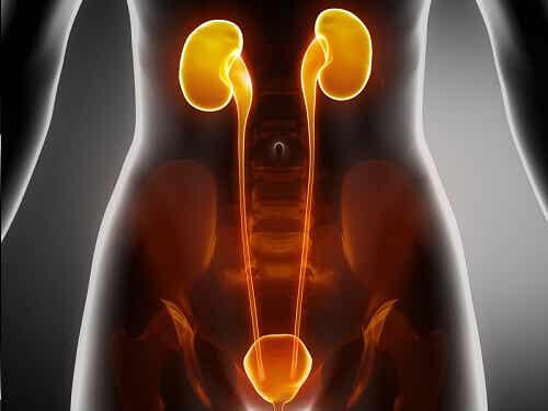 Symtom på njursjukdomar att hålla utkik efter