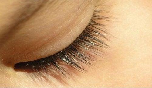 hur många ögonfransar tappar man per dag