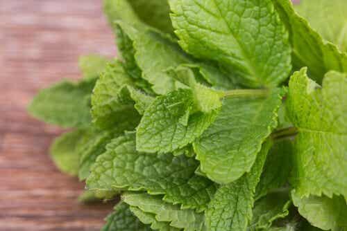 Hälsofördelar med grönmynta - därför bör du äta det