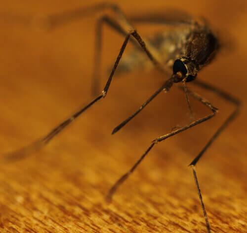 Gör dina egna myggmedel