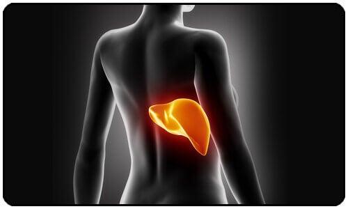7 tecken på en förgiftad lever