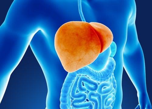 Sex dåliga vanor som skadar din lever