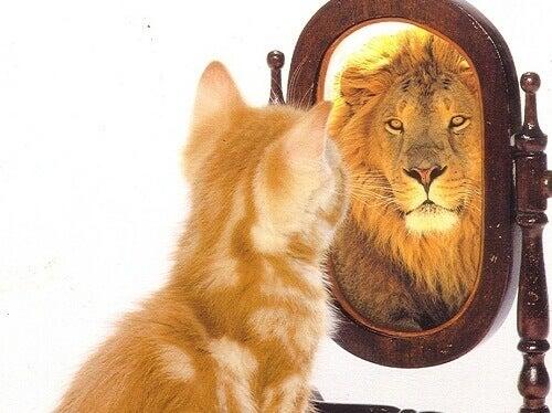 Katt som ser lejon i spegeln