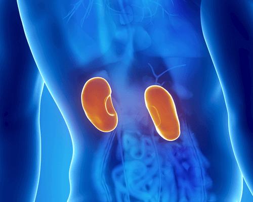 Njurinfektion: symtom och behandlingar