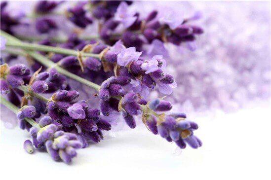 4-lavendarsvenska