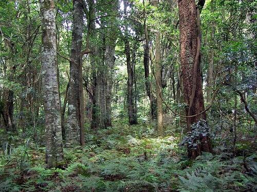 Natur-Poytr