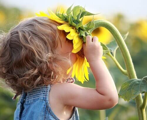 Barn luktar på solros