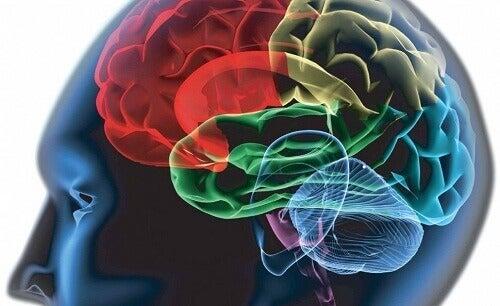 Rationellt tänkande styrs av medveten information