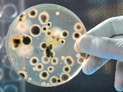 Bakterier på disk