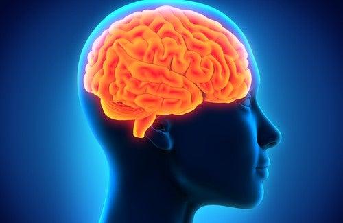 Hjärnan-och-minnet