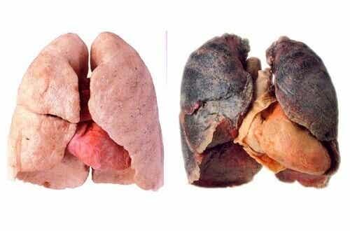 Hälsosamma tips för att få renare lungor