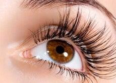 Ögonfransar 3