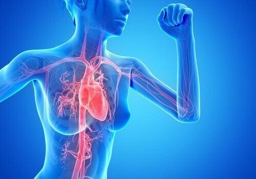 Cardioträning