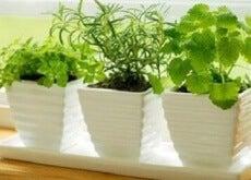 Växter som attraherar positiva energier