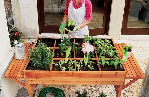 Starta en ekologisk grönsaksodling i stan