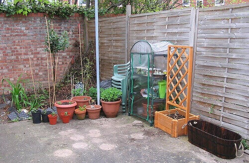 Grönsaksodling på bakgård