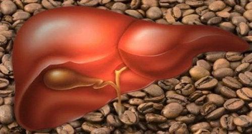 kaffe farligt för levern