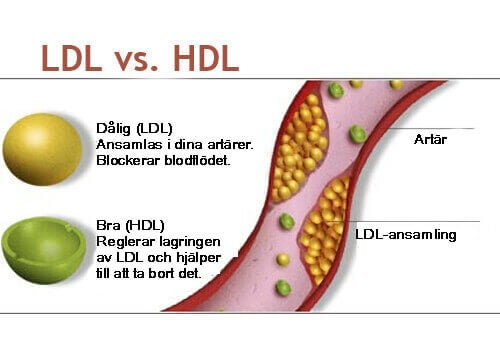 LDL vs HDL