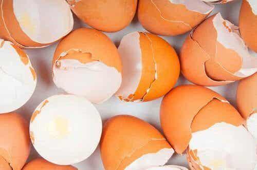 Äggskal och dess överraskande användningsområden