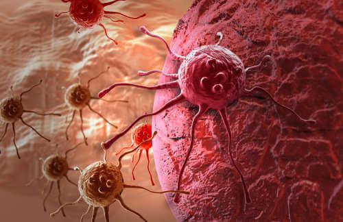 Ingefära har anticarcinogena substanser
