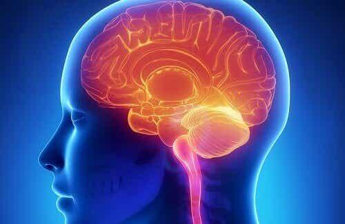 Smarta tips för att hålla hjärnan ung