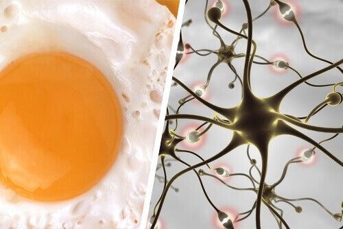 Ägg-hjärna