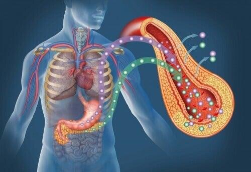Bukspottkörtel-diabetes