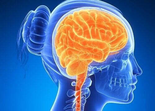 6 livsmedel som håller din hjärna aktiv
