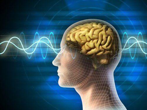 Hjärnvågor