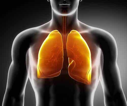 3 teer som hjälper dig att stärka lungorna