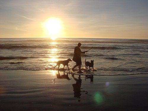 En promenad vid havet