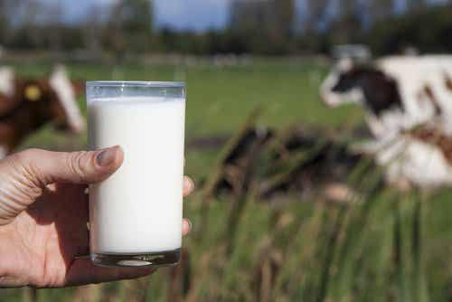 Komjölk; varför du inte borde dricka det