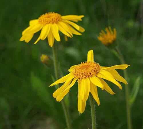 Ta ett tillskott med homeopatiska blommor
