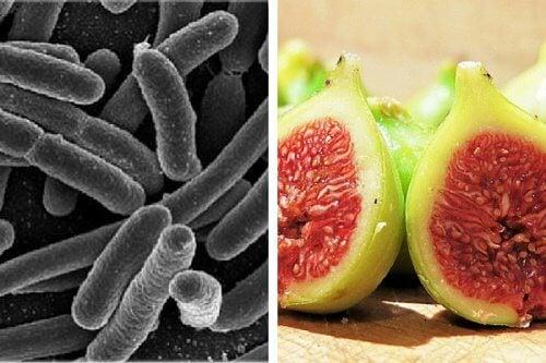 bakterier för magen