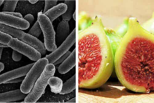 Rensa bort skadliga bakterier i magen med fikon
