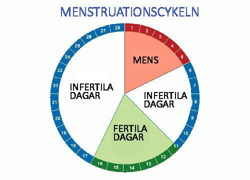 kan man bli gravid dagen efter mens