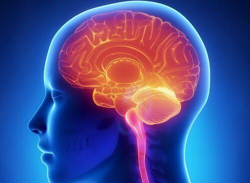 Hjärnan i huvudet