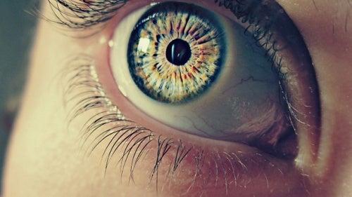 pupiller
