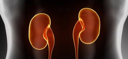 Stress gör så att njurarna utsöndrar fosfat